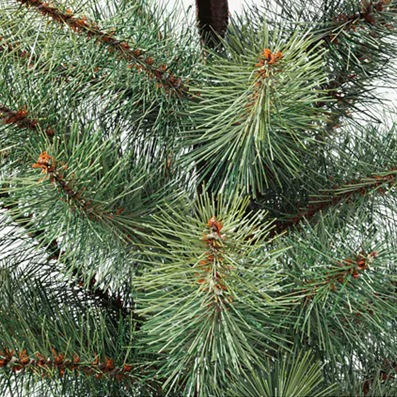 Brad artificial in ghiveci, inaltime 55 cm, diametru ghiveci 12 cm, Verde/Negru
