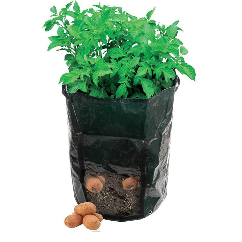 Saci pentru culturi de legume, 35 x 45 cm, 2 bucati