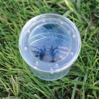 Borcan cu lupa pentru observarea insectelor Educational Insights, 3 - 7 ani