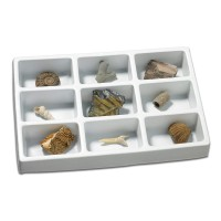 Kit paleontologie Fosile Educational Insights, 8 - 12 ani