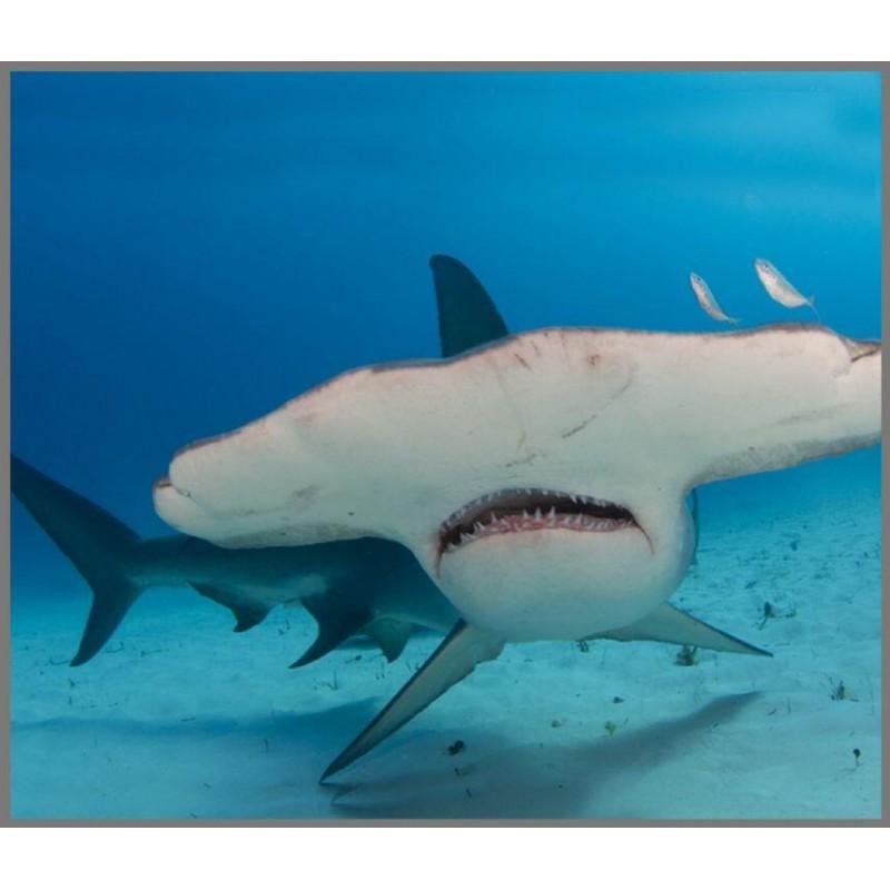 Proiector tip lanterna Brainstorm, 11 cm, 8 imagini, 3 ani+, model rechini